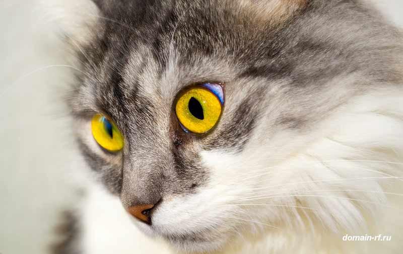 Продвижение сайта котом