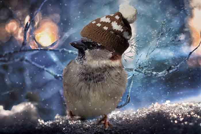 зима, воробей, птица