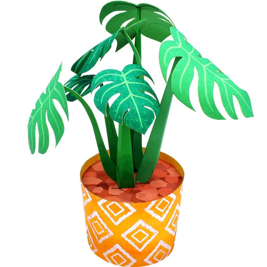 Декоративное растение : Монстера