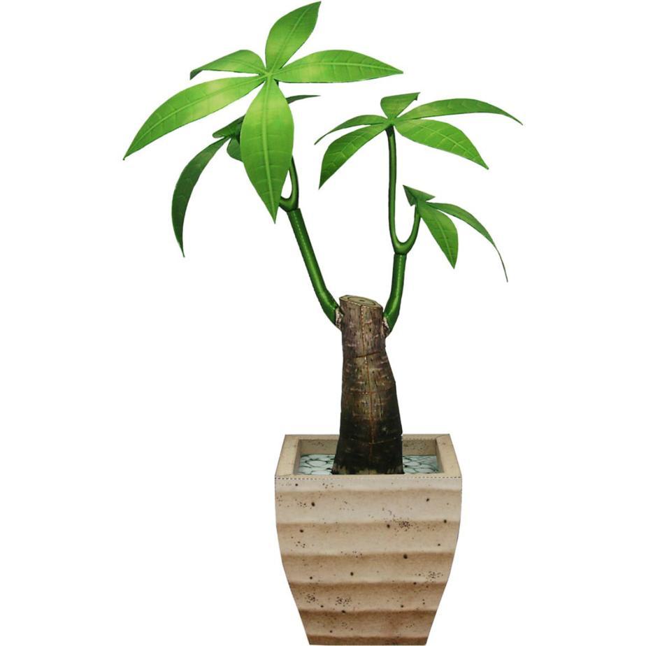 Пахира, декоративное растение, цветы из бумаги