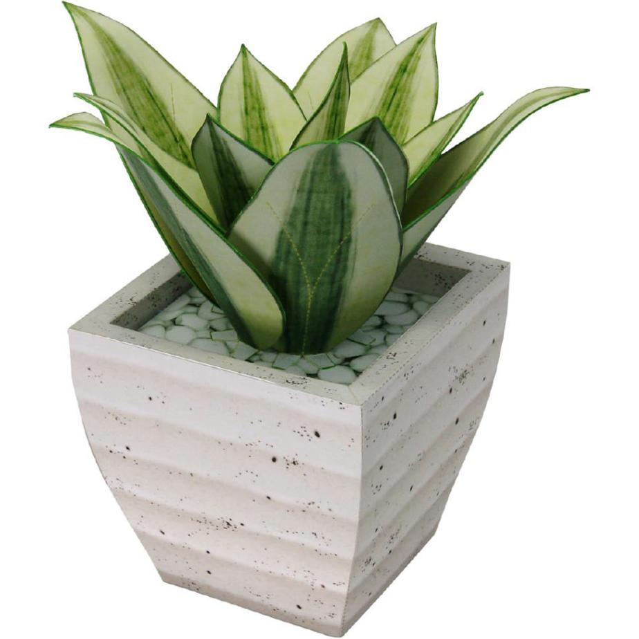 Сансевиерия, Голден Ханни, цветы из бумаги